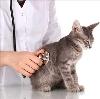 Ветеринарные клиники в Унече